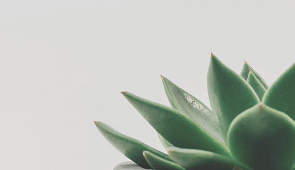 Frases motivadoras de la filosofía zen 9