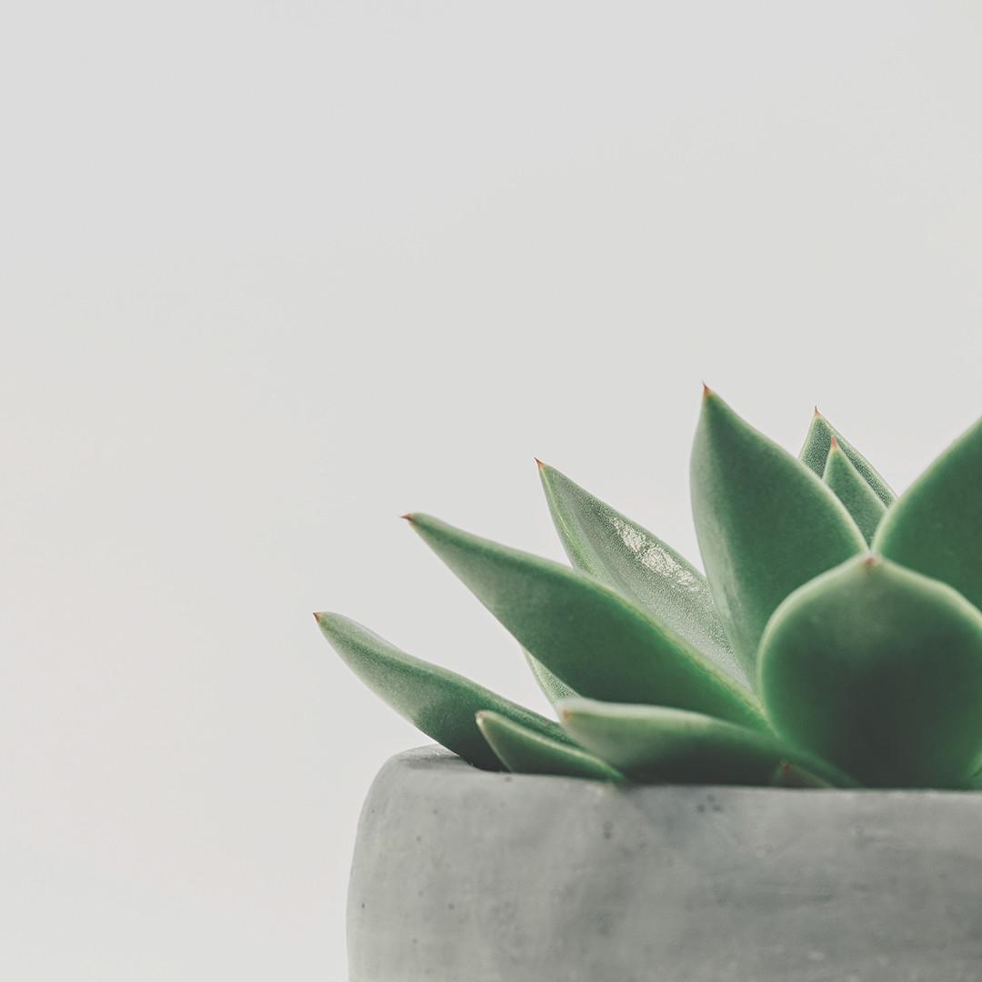 Frases motivadoras de la filosofía zen 2
